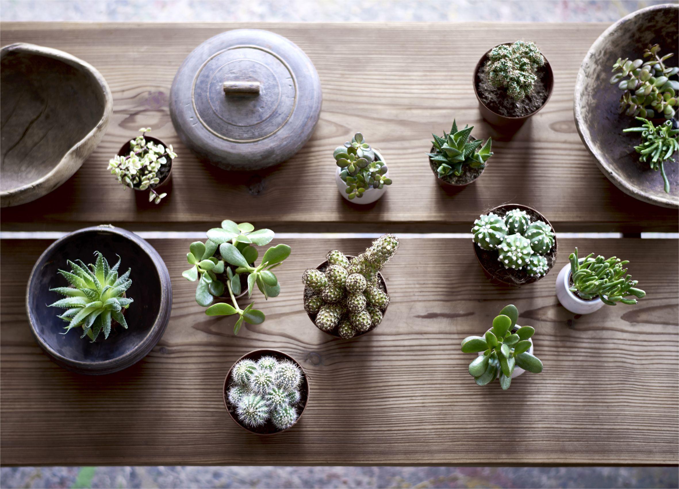 Best House Plants To Thrive In The Heat Heat Tolerant Indoor Plants