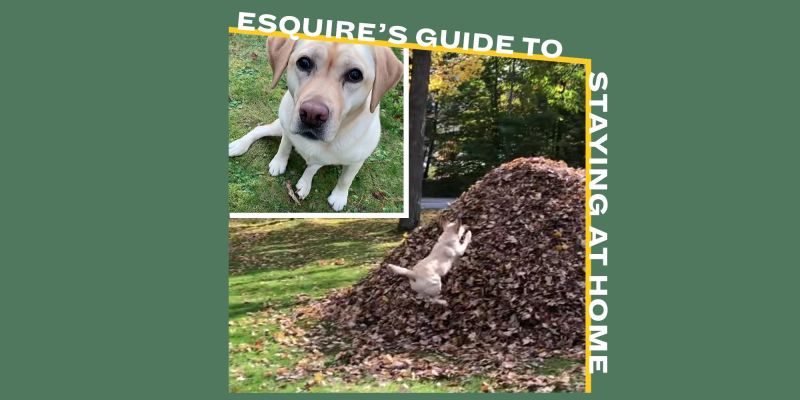 I Want to Watch This Dog Jump into Piles of Leaves Over and Over and Over and Over 1