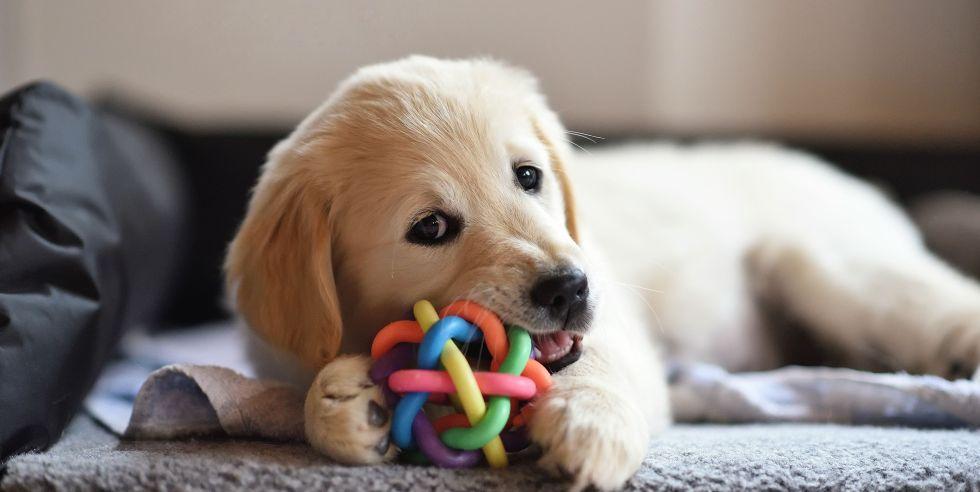 indoor dog toys