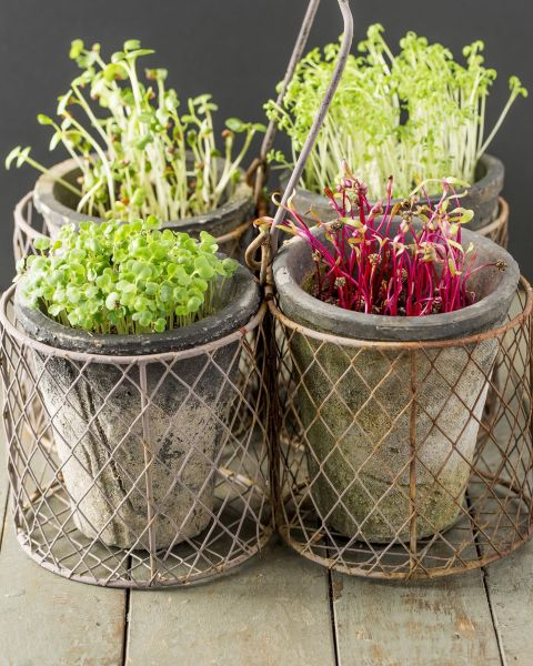 indoor vegetable garden ideas Indoor Vegetable Garden Ideas - How to Grow Vegetables Indoors