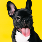 31 Adorable Dog Breeds To Have As Pets Cutest Dog Breeds