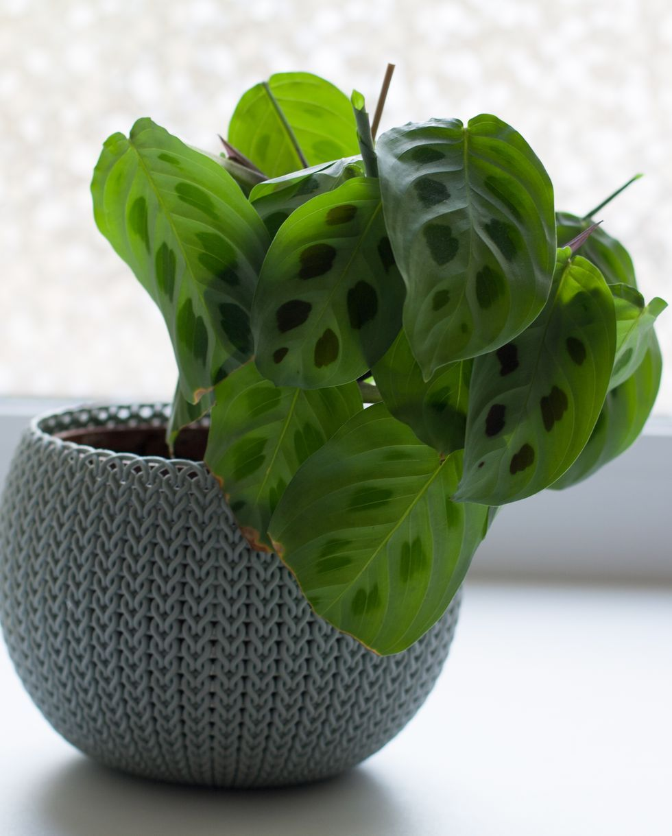 25 Best Indoor Plants Easy Indoor Gardening Ideas