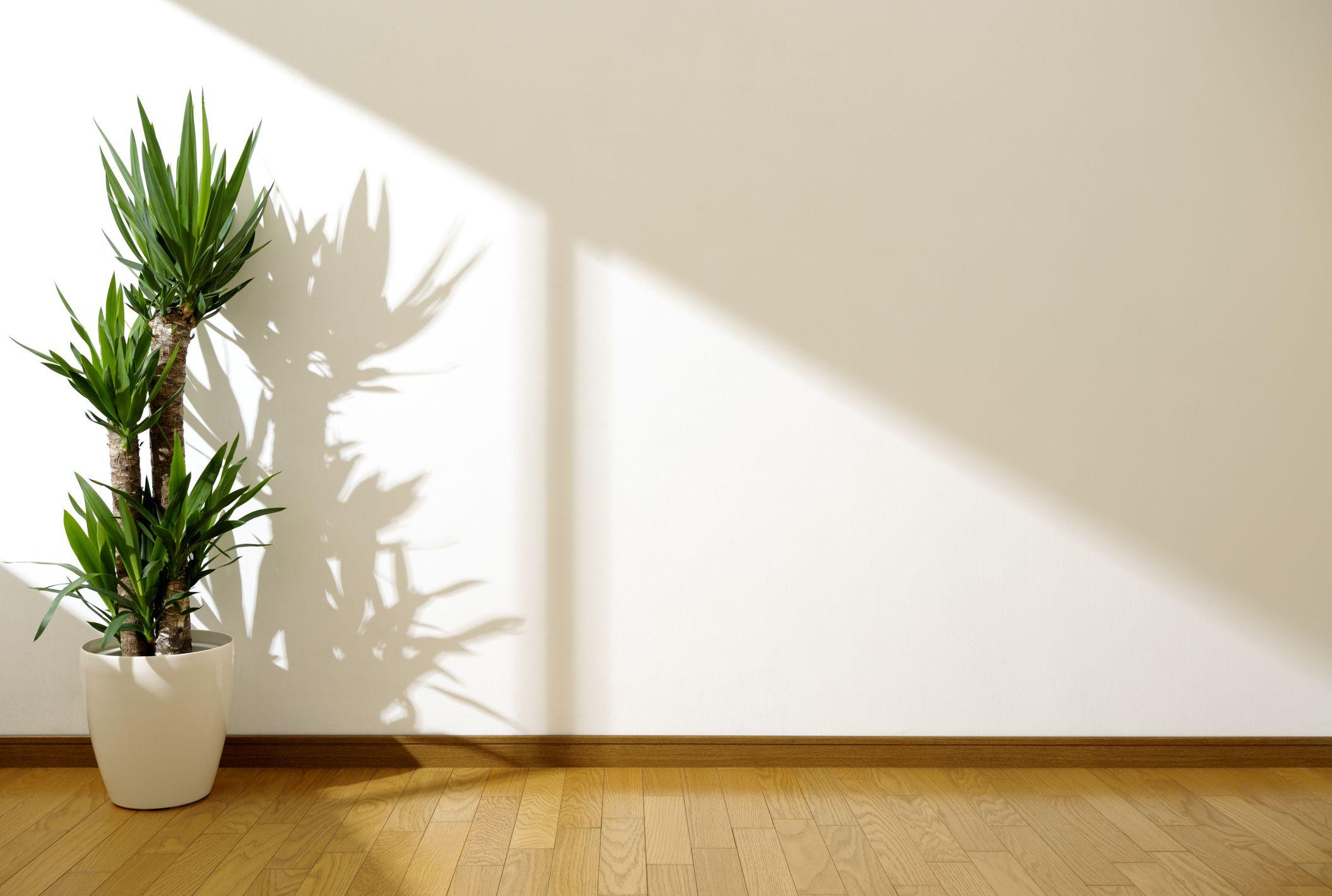 10 Best Indoor Trees Best Indoor Trees You Can Buy