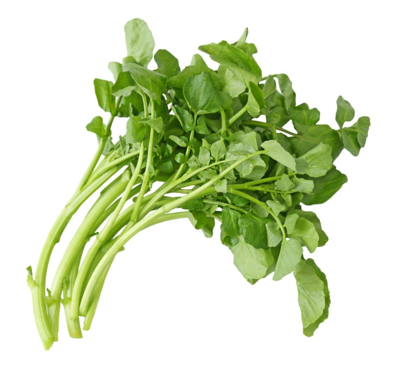 A small loose bunch of watercress curved to right, on white
