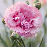 50 Flowers With Surprising Meanings Meanings Of Flowers