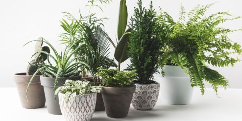 7 Mistakes You're Making With House Plants - Indoor Plant Care