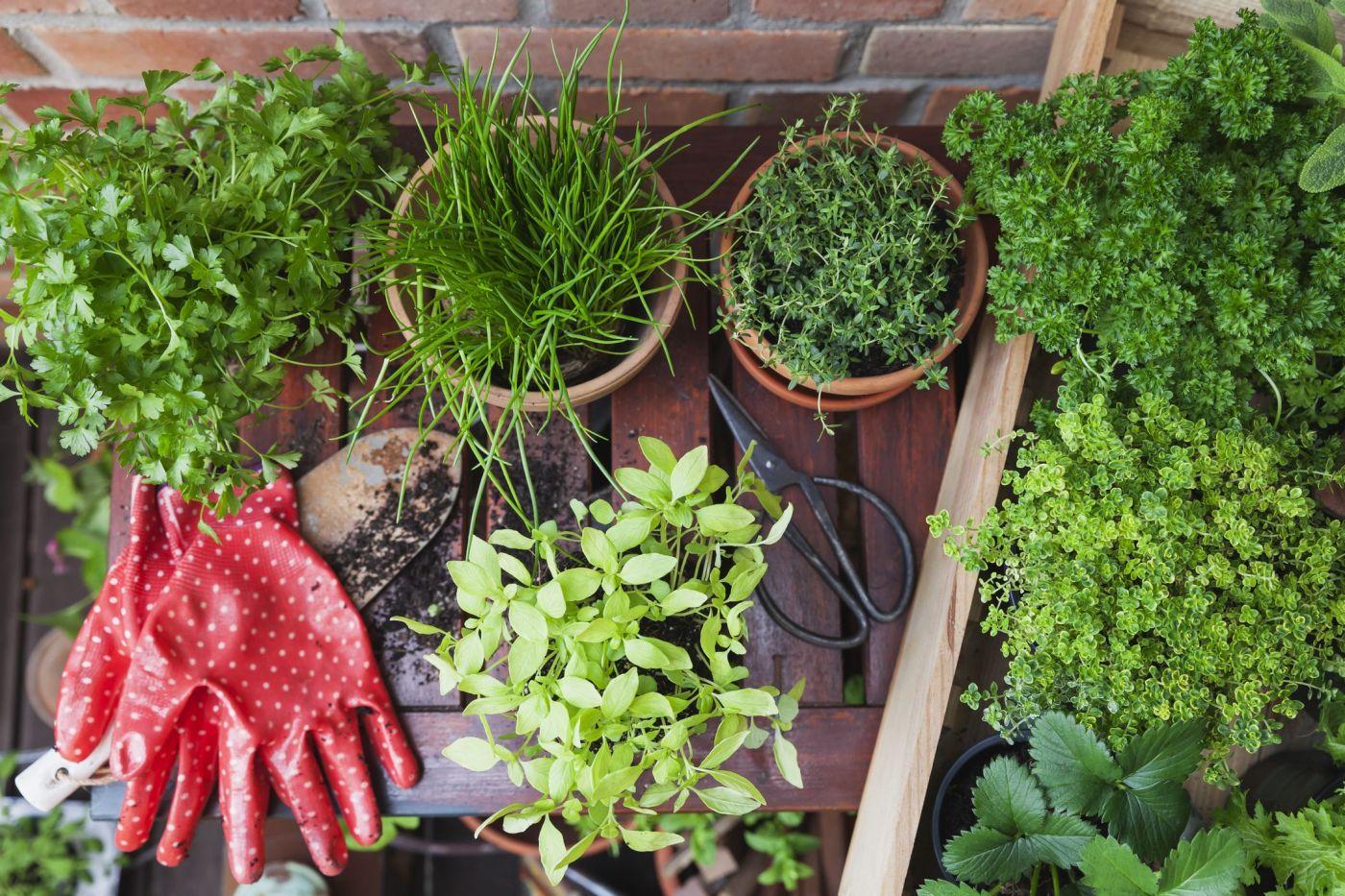 diversas macetas con plantas en una terraza