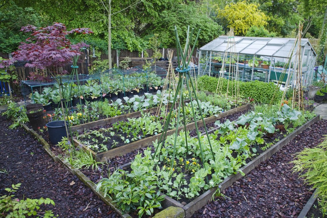 The 6 Most Cost Effective Vegetables To Grow In Your Garden