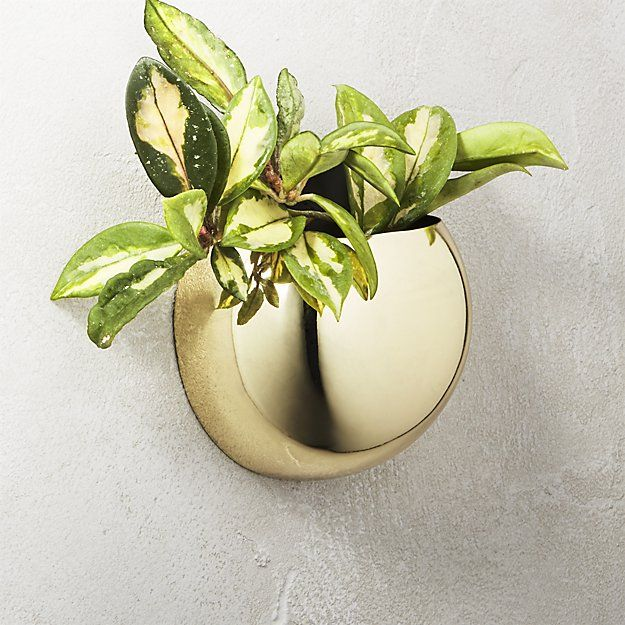 The Best Wall Planters For Outdoor And Indoor House Plants Planter Boxes