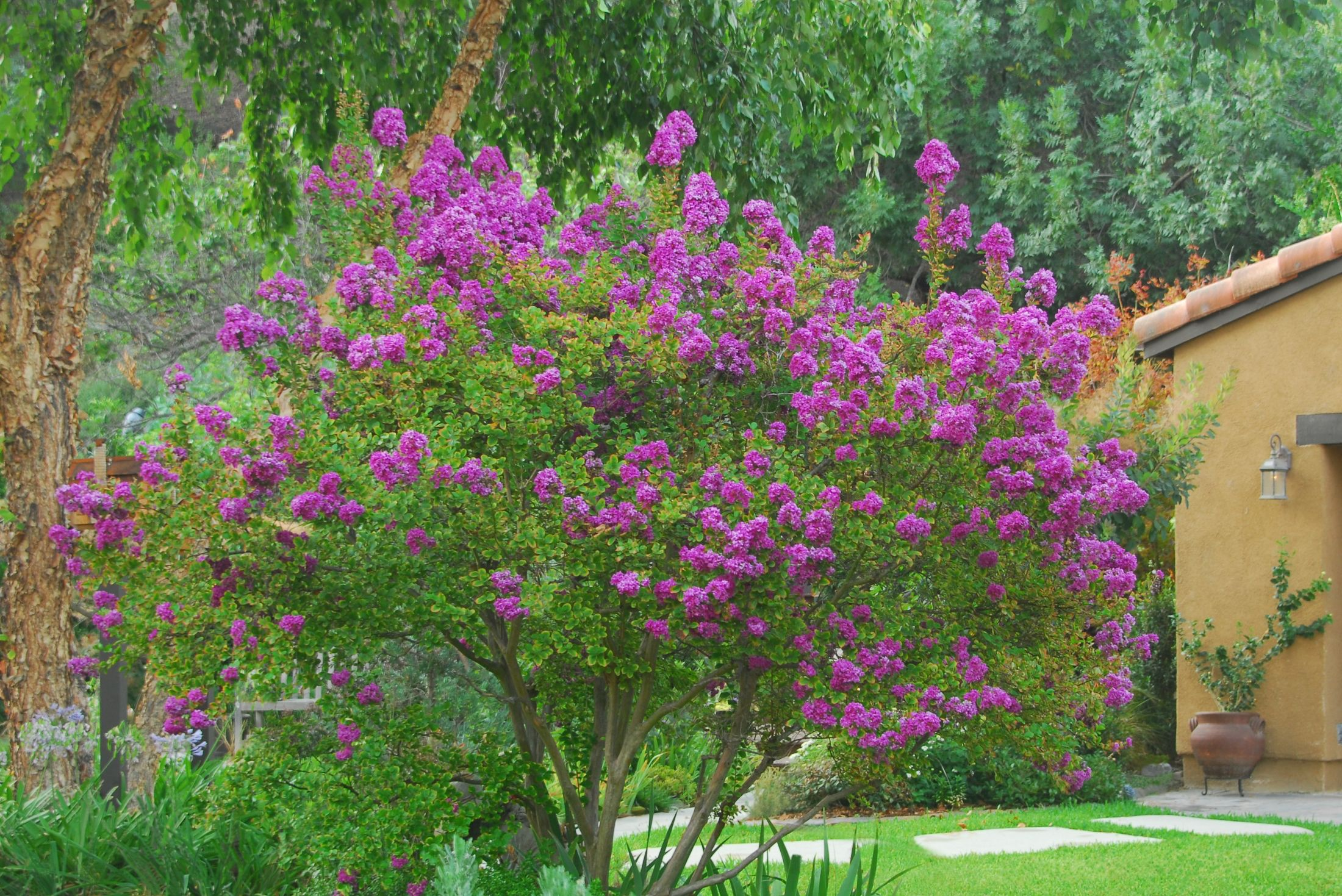9 trees for small yards best small