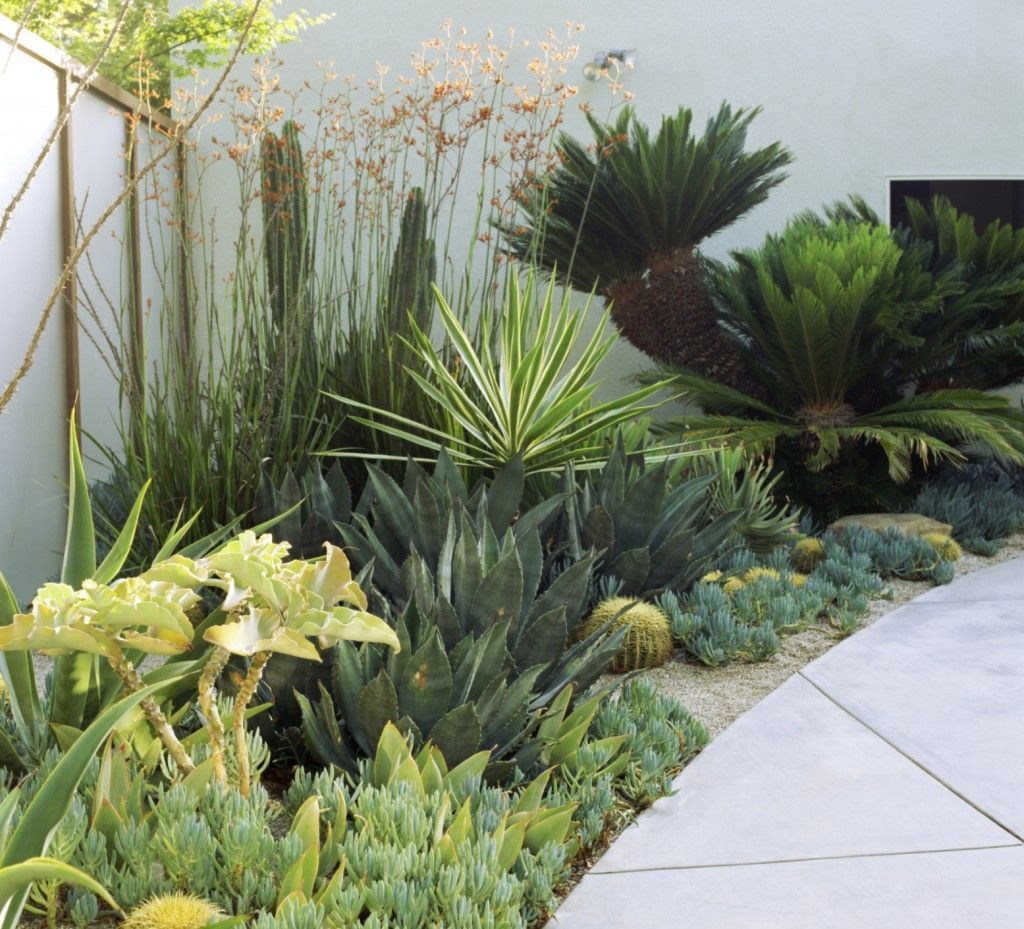 10 tips for a stylish contemporary garden design on Tree Planting Ideas For Backyard id=18143