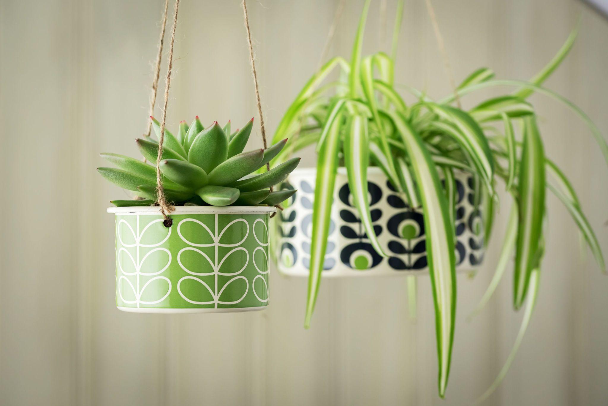 15 Best Indoor Hanging Planters on Hanging Plant Pots Indoor  id=55470