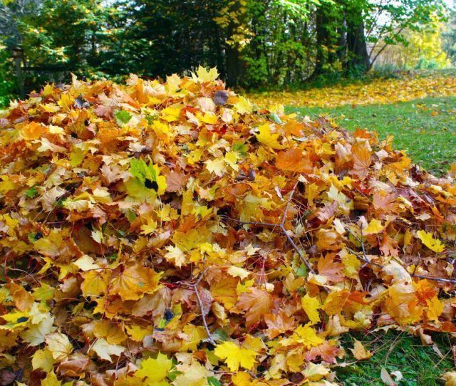6 Tips To Get Your Lawn Ready For Fall
