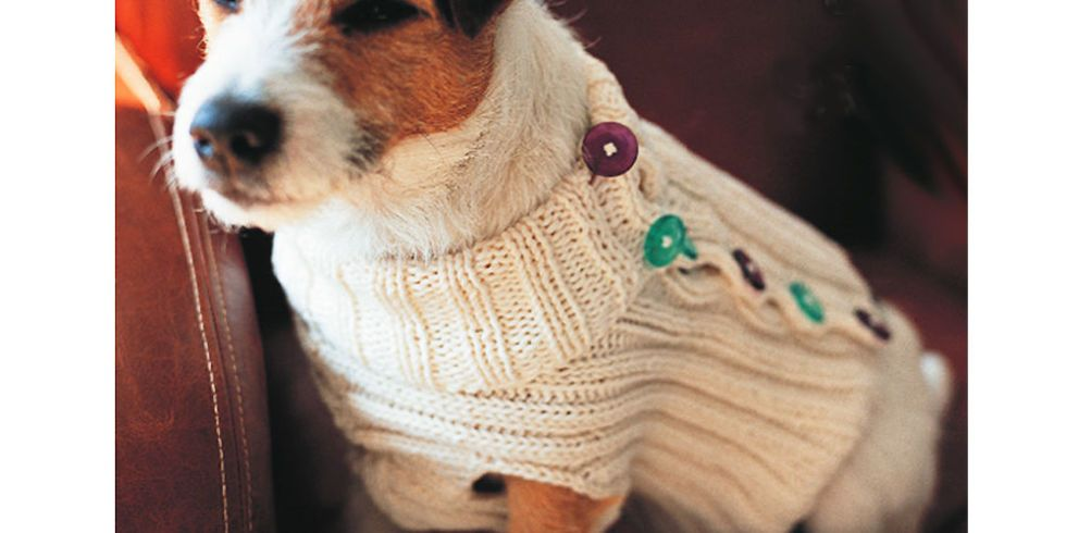 Knitting Pattern For Dog Coats
