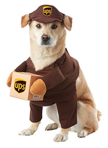 Whether halloween has sneaked up on you this year or you've been planning how to dress up your pet since last halloween, these adorable pet halloween costumes add so much fun to the spooky season. 35 Best Dog Costumes For Halloween 2021 Cute Funny Halloween Costume Ideas For Puppies