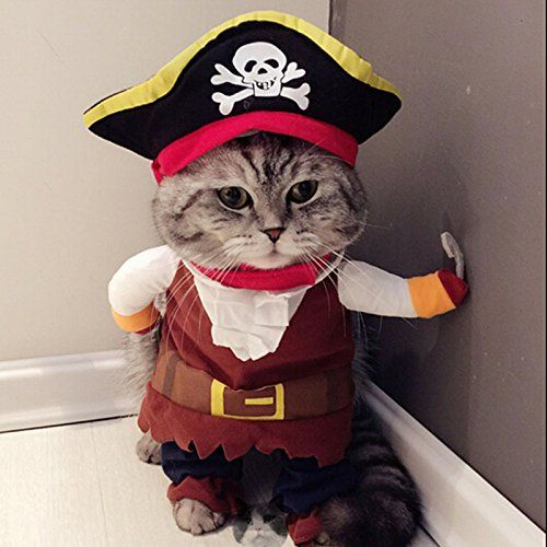 Our pet costumes will make them look adorable right along with you whether that's ghostbusters, chucky or disney. 22 Best Halloween Costumes For Cats 2021 Best Cat Costumes