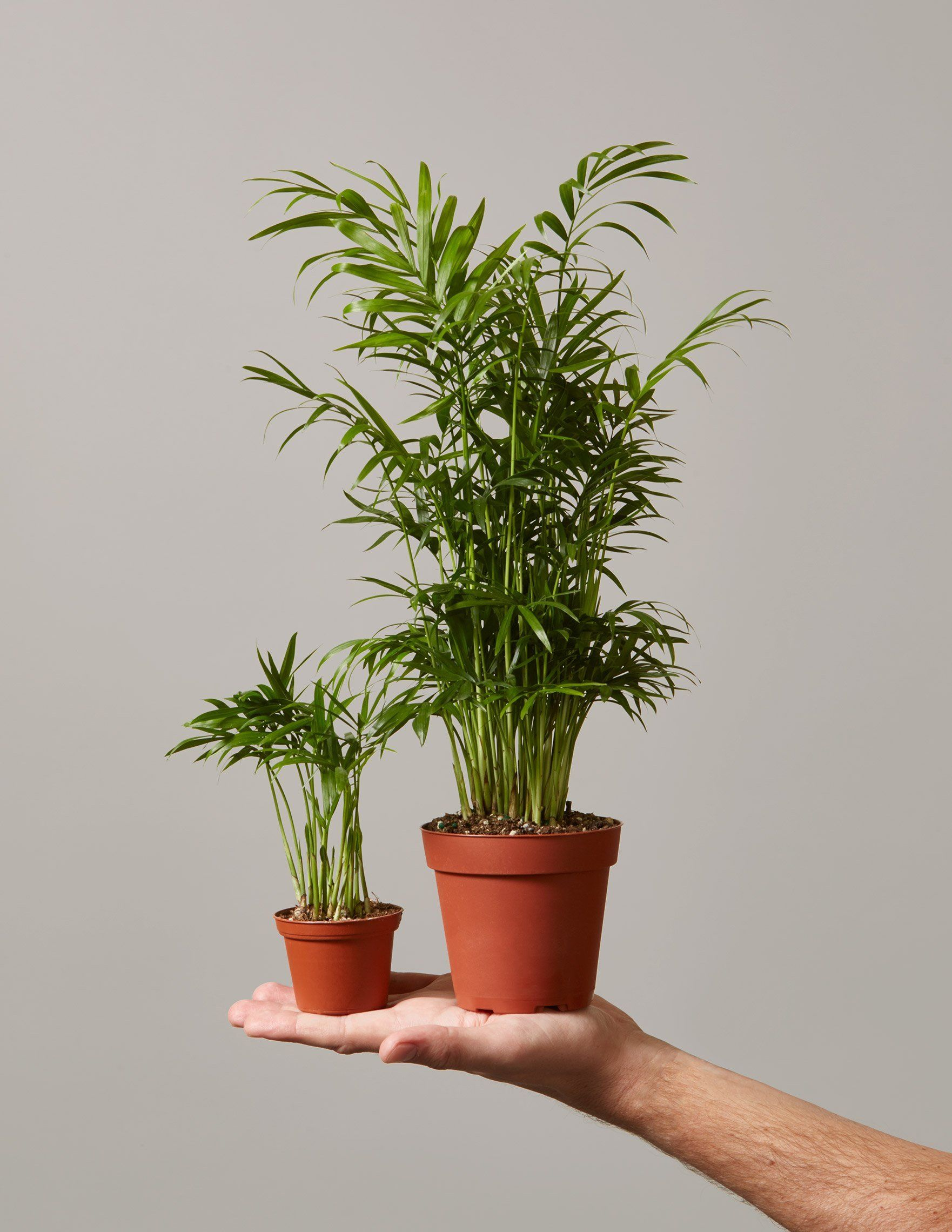 Best Tropical Indoor Plants Philodendron Monstera Pilea