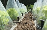 11 Ways To Beat Nature And Extend Your Gardening Season