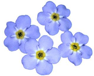 Biology flower