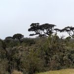 Tropical Montane Forestm Horton Plains