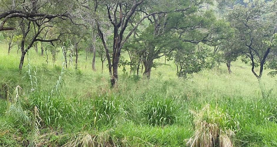 Savanna grassland Monaragala