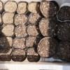フワッフワの銀の土で枝豆,オクラ,イタリアンパセリ,マリーゴールドの育苗を始めてみた&庭のインゲン本葉出てきた