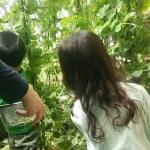 絹さや収穫ピーク♪4月10日の庭の畑で収穫した野菜(絹さや,のらぼう菜,ルッコラ,紅菜苔)