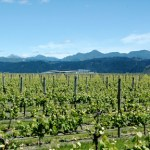 New Zealand Comes to Vancouver for Playhouse Wine Festival