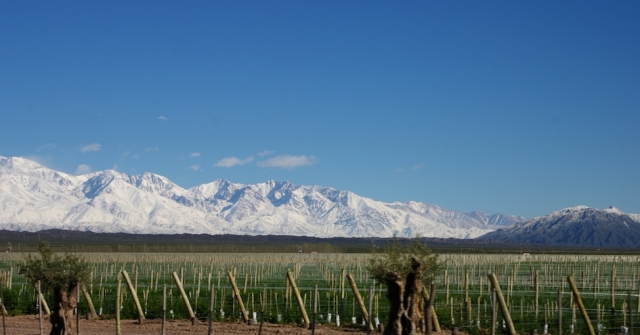 Malbec Malbec plantings in Uco Valley, Argentina, against the stunning backdrop of the Andes draped in fresh snow, Tim Pawsey photo