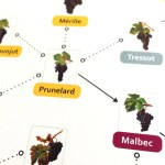 Malbec, Who's Your Daddy? Prunelard (at l'Institut de la Vigne)