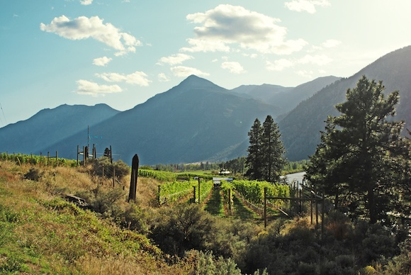 Origin sourced its Syrah from Scout Vineyard: classic Similkameen