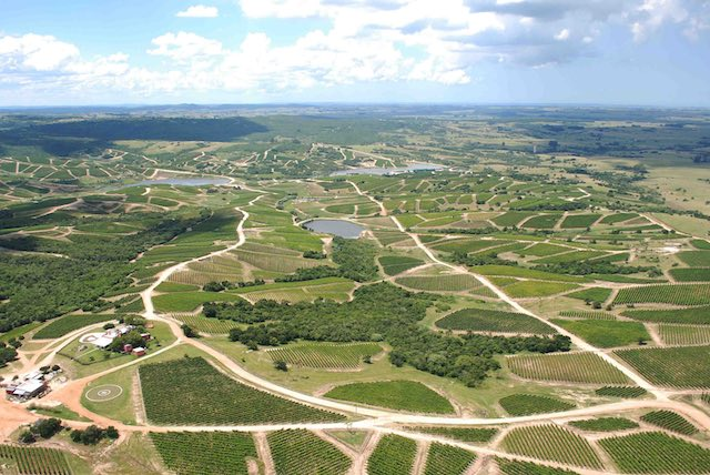 Bodega Garzón vineyards: a staggering 100 different parcels