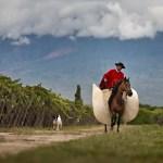 Argentina: Work Horse Wines Deliver Value