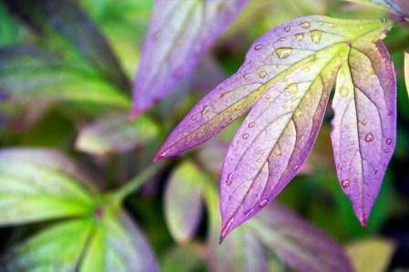leaf rain 2