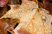Rainy Leaf 9