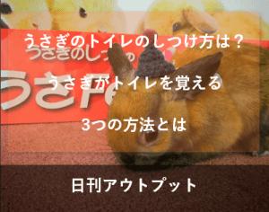 rabbit-toilet