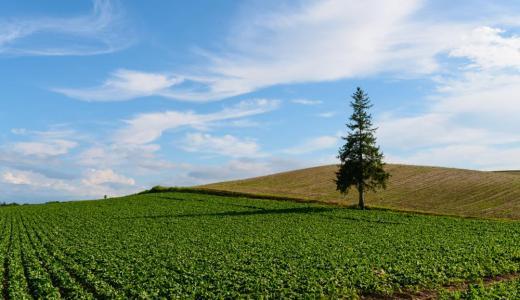 【北海道】美瑛の圧倒的な自然!気分はまるでヨーロッパの田園風景♫