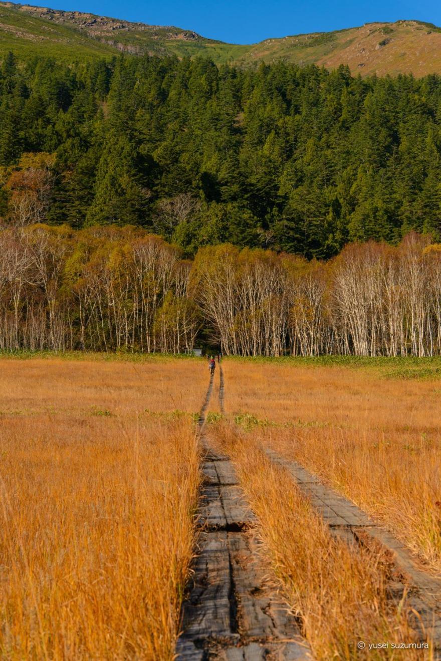 植物研究見本園から至仏山への木道