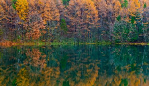 紅葉の御射鹿池。東山魁夷作「緑響く」のモチーフの場所です。