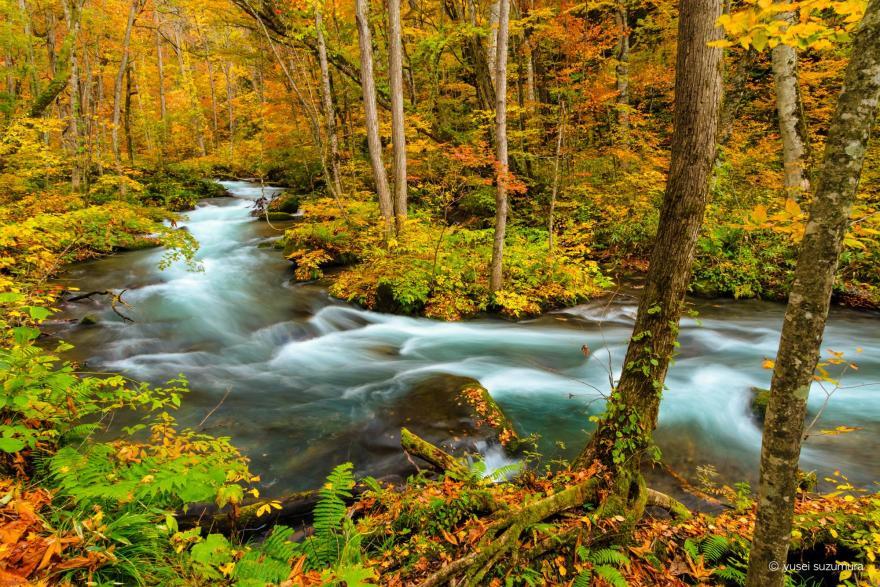 奥入瀬渓流 川の流れ
