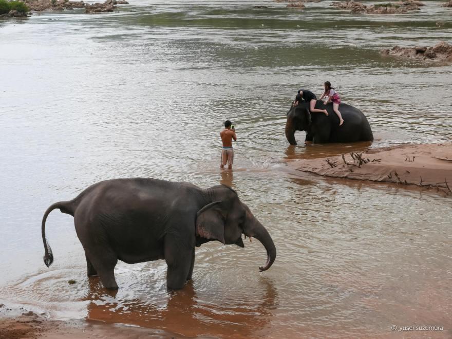 ゾウと水浴び ルアンパバーン