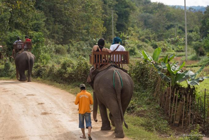 象使い ジャングル一周