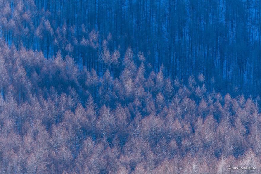 霧ヶ峰高原 霧氷 カラマツ