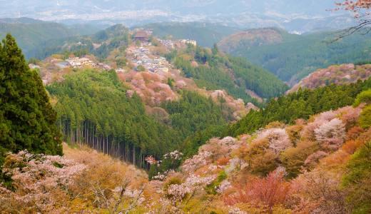 日本一の桜の名所!「一目千本」の吉野山で満開の桜を撮影してきた。