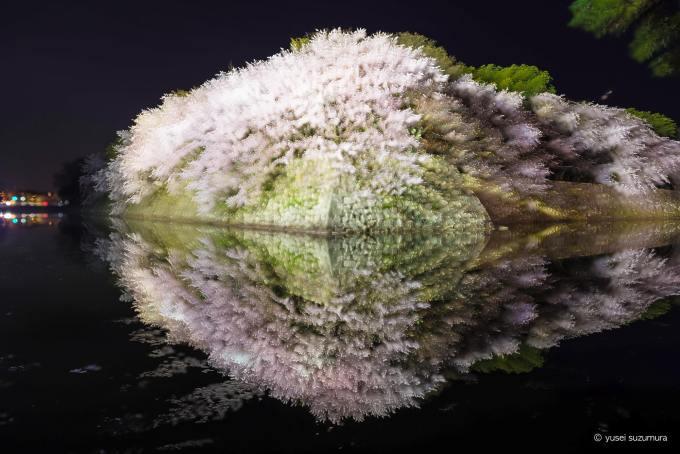 彦根城 桜 多重露光