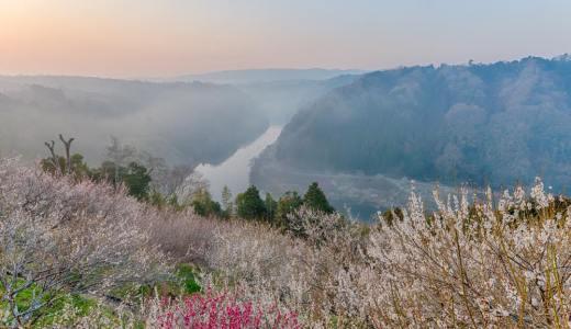 奈良三大梅林の一つ、月ヶ瀬梅林で雲海を撮る
