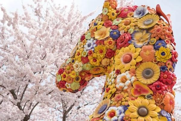 官庁街通りの桜-02