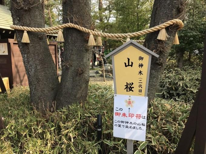 櫻木神社御神木