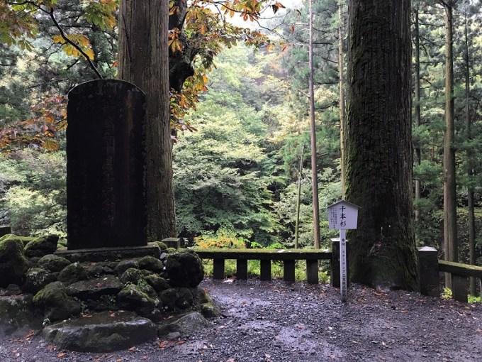 榛名神社千本杉