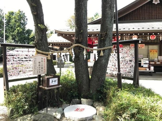 櫻木神社ご神木
